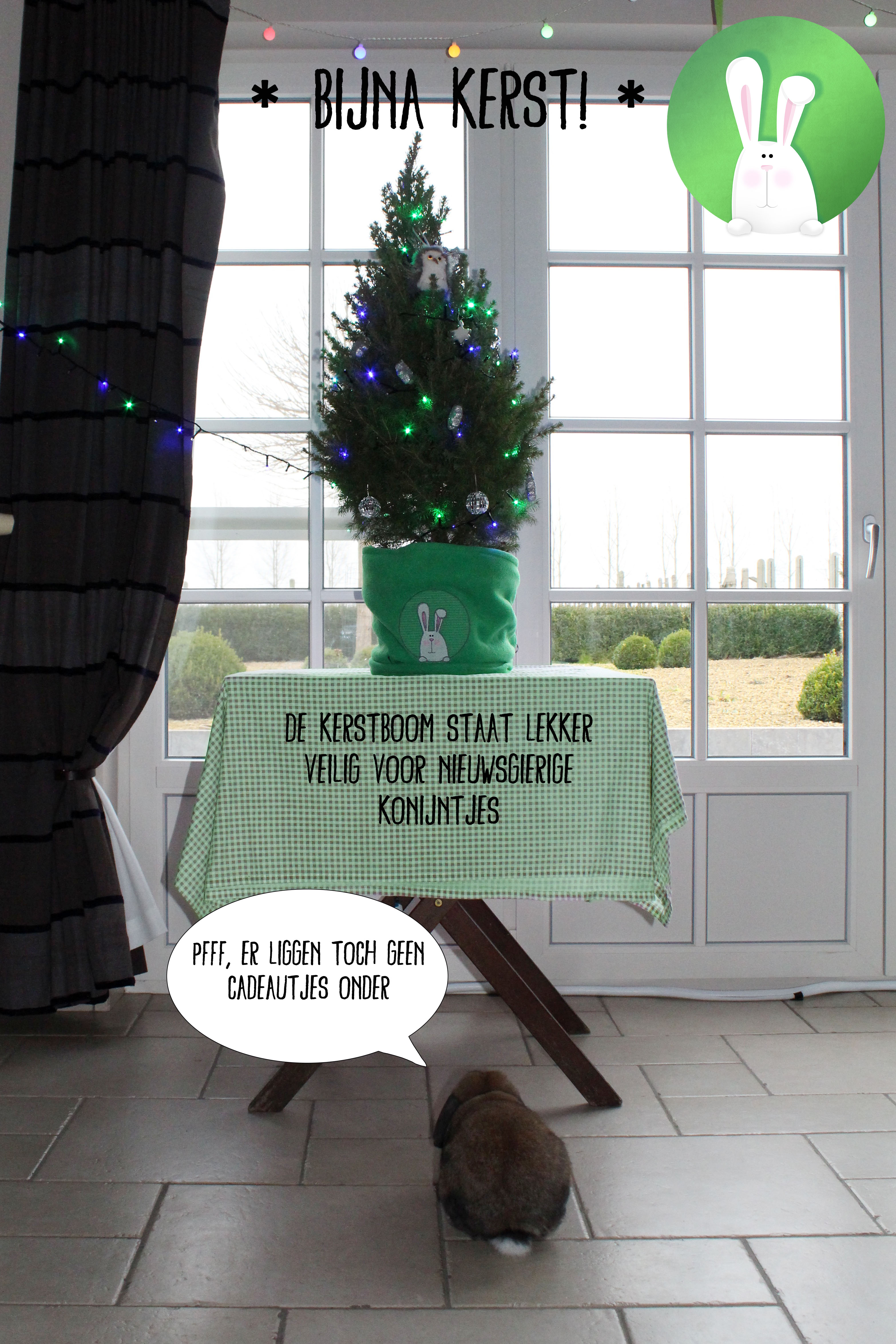 Pas op tijdens de kerstperiode: Kerstbomen zijn giftig voor konijnen! | Konijnenadviesbureau Hopster