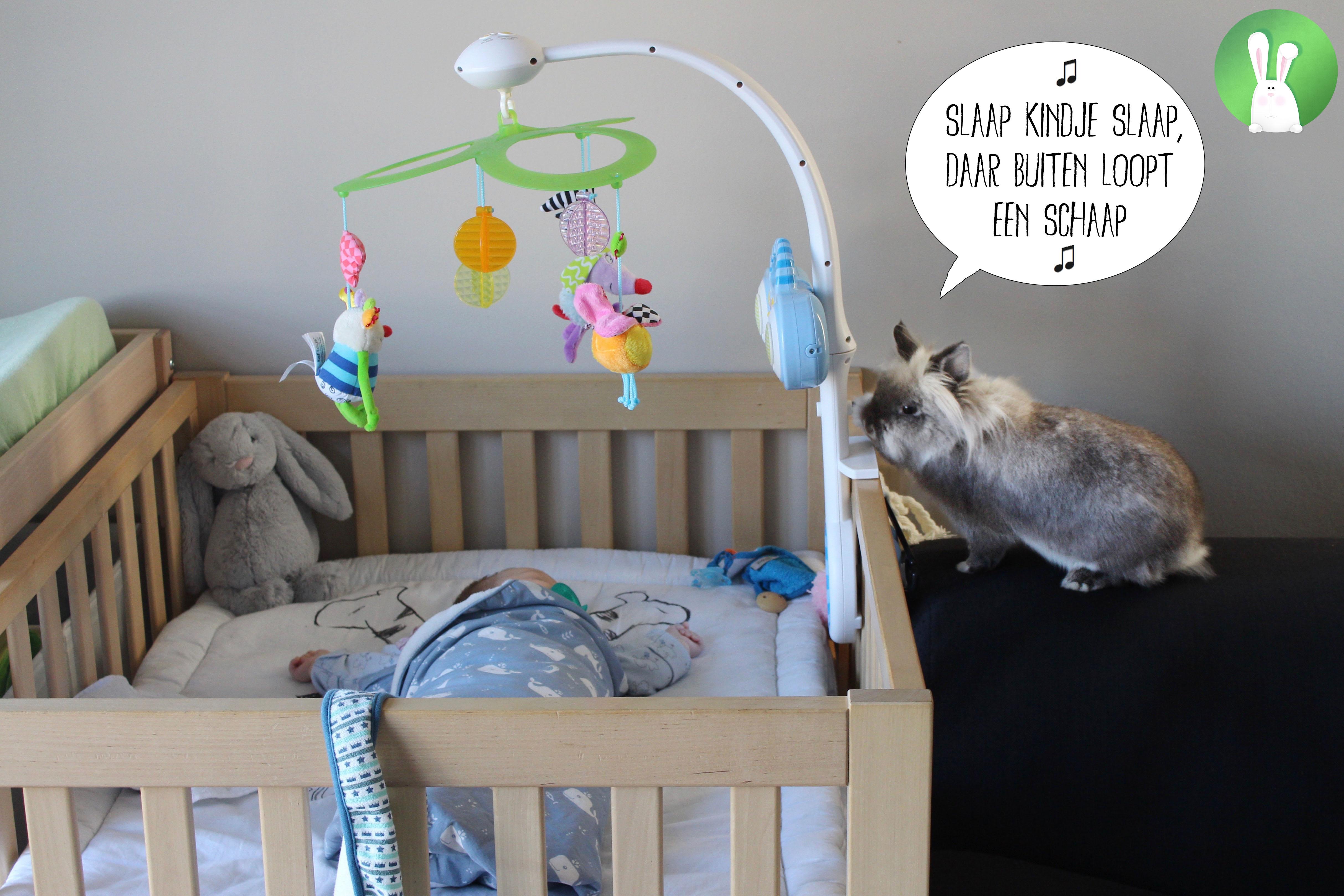 Hoe bereid je je konijnen voor op de komst van een baby? | Konijnenadviesbureau Hopster