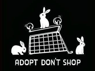 Adopt don't shop | Hopster vzw