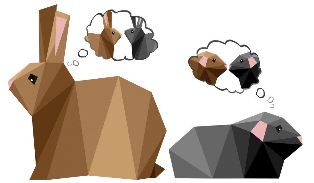 Konijn versus cavia | Hopster vzw