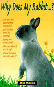 Why Does My Rabbit | Hopster vzw