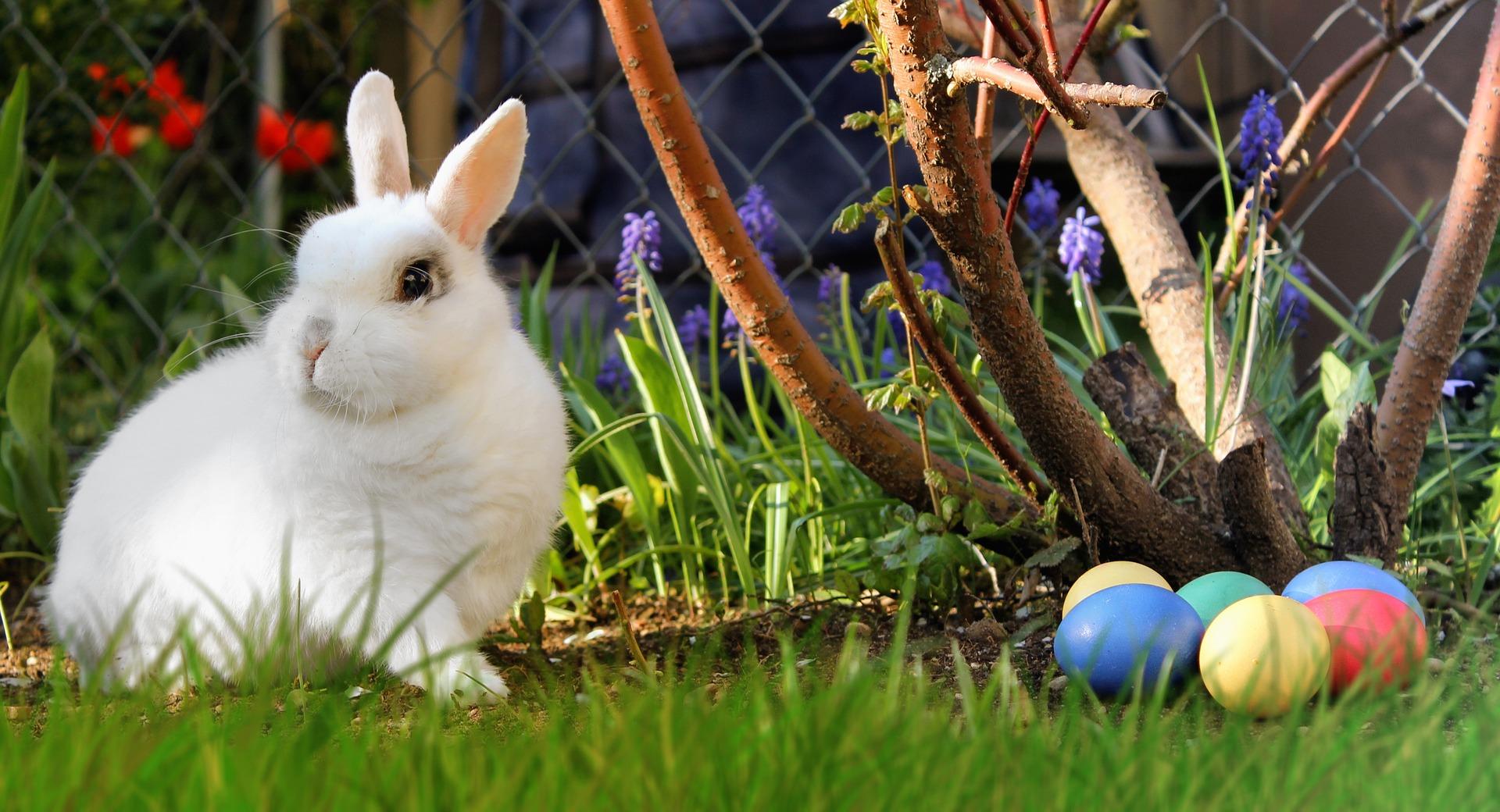 Konijn geven voor Pasen? | Hopster vzw