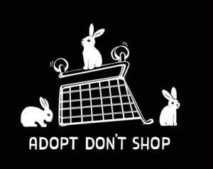 Adopt don't shop | Konijnenadviesbureau Hopster