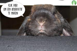 Reservatie | Konijnenadviesbureau Hopster