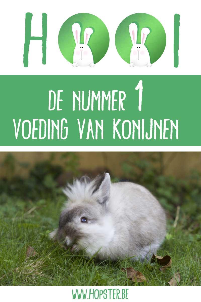 Hooi nummer 1 voeding konijnen | Hopster vzw