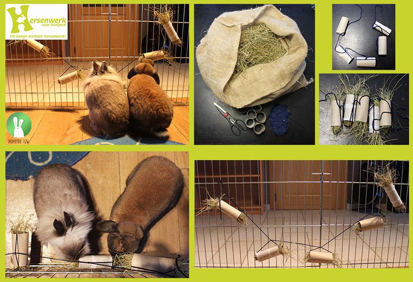 Hersenwerk voor konijnen | Hopster vzw