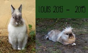 Louis 2013 2015