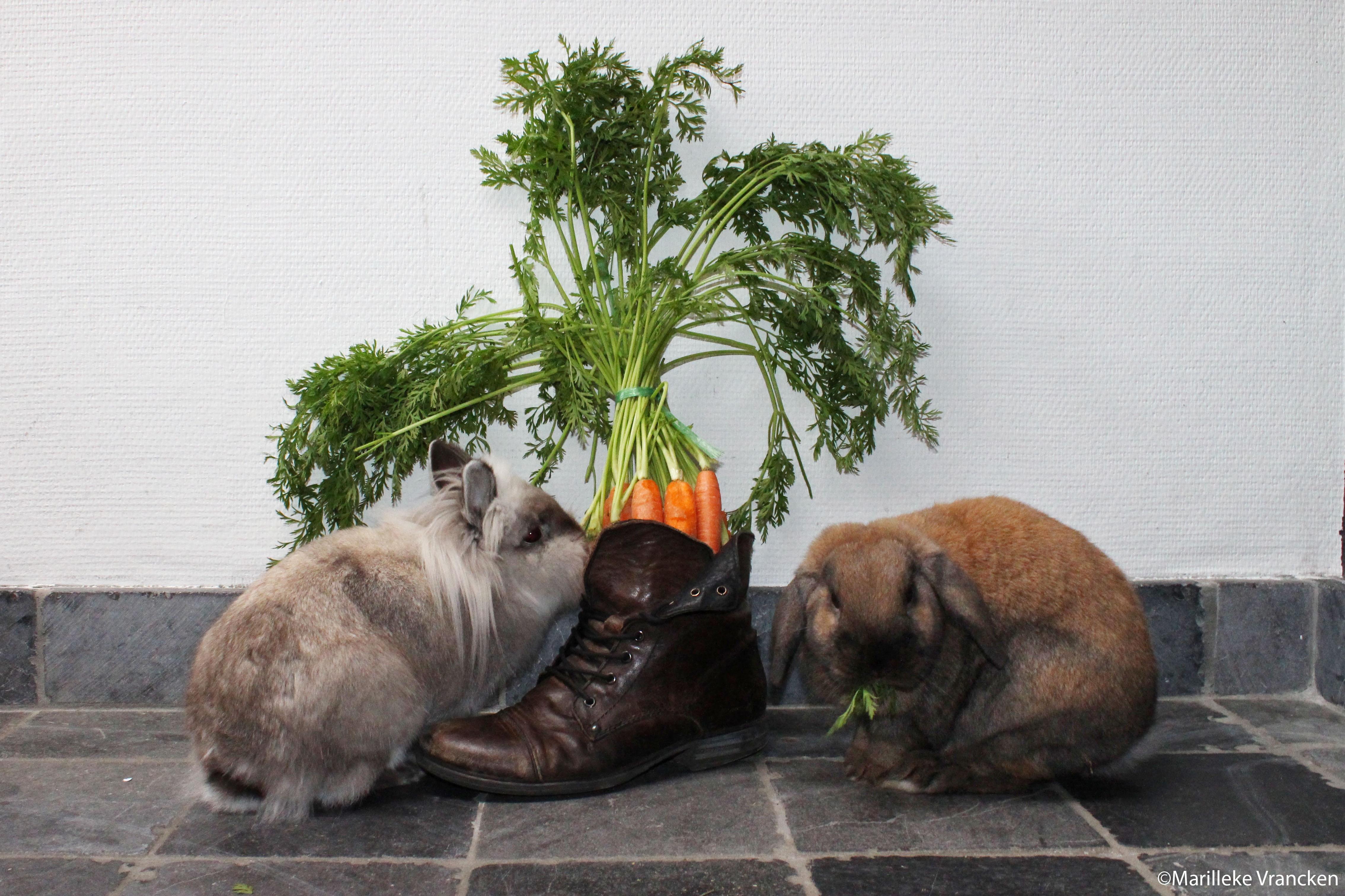Sinterklaas brengt een snuffelmat | Konijnenadviesbureau Hopster