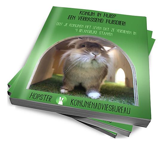 Konijn in huis | Konijnenadviesbureau Hopster
