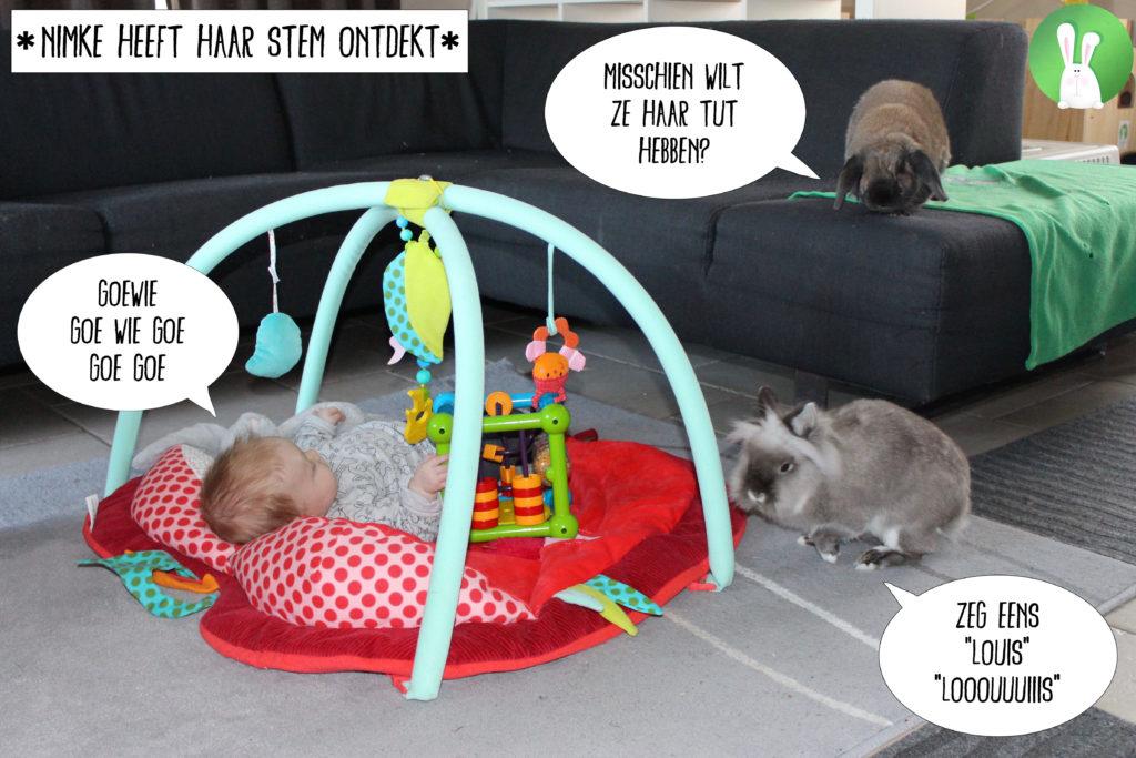Hoe bereid je je konijnen voor op de komst van een baby?