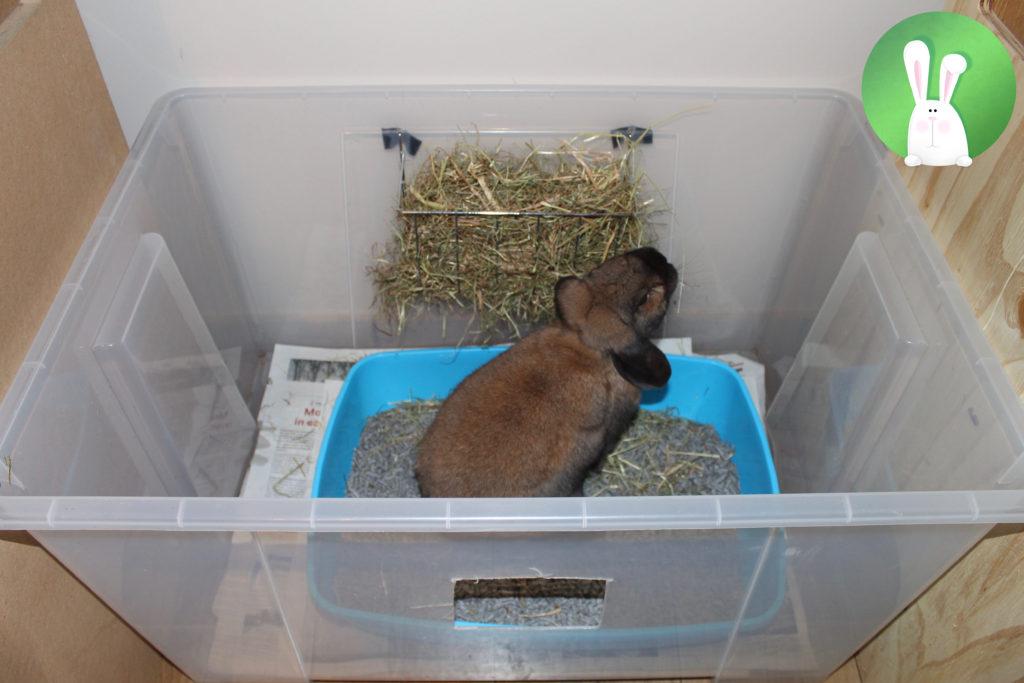 Zindelijkheidstraining voor binnenhuiskonijnen | Konijnenadviesbureau Hopster