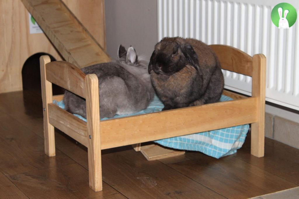 De perfecte huisvesting in 5 stappen voor binnenhuiskonijnen