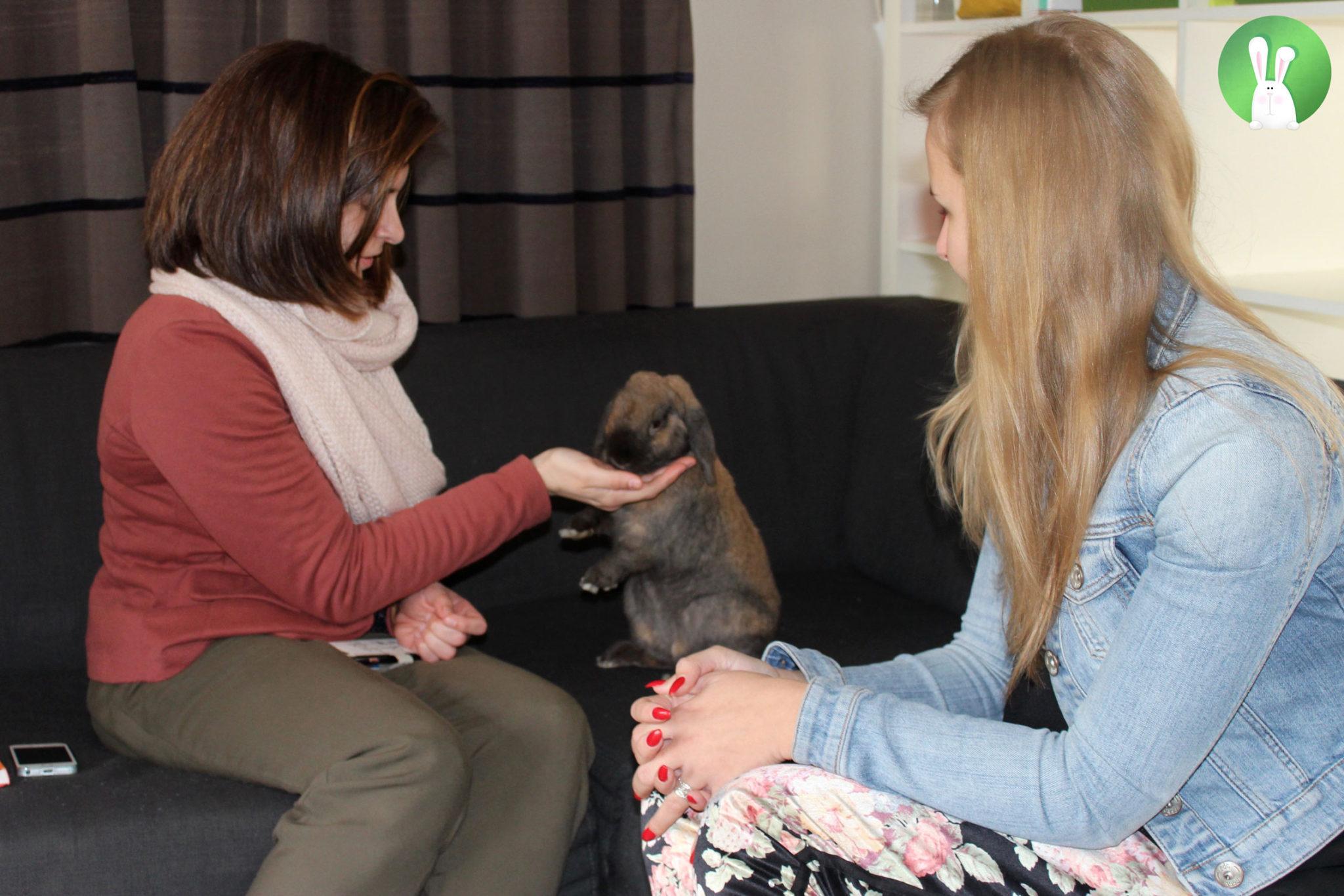 Train je konijn | Konijnenadviesbureau Hopster