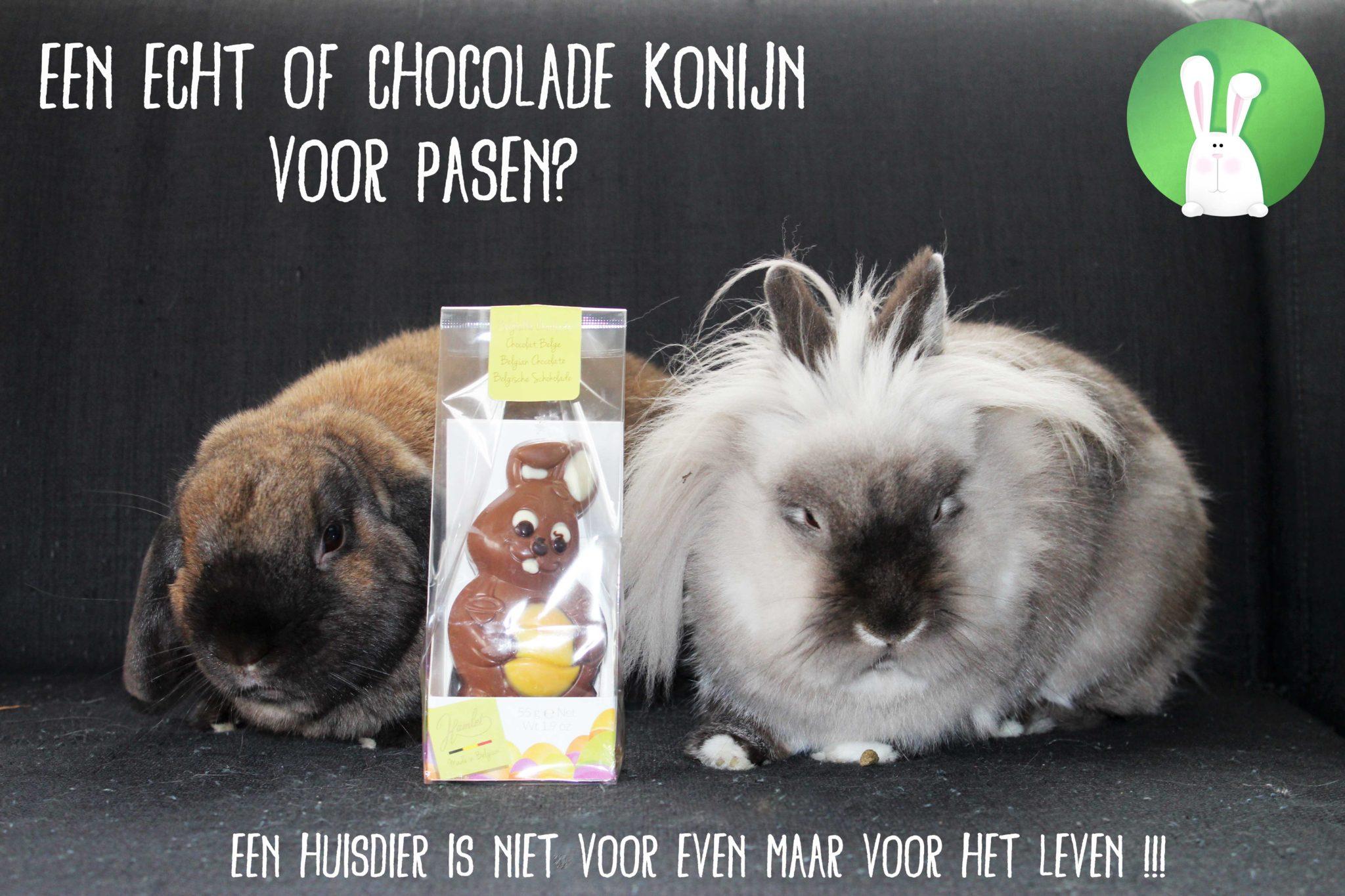Een echt of chocolade konijn voor Pasen? | Konijnenadviesbureau Hopster