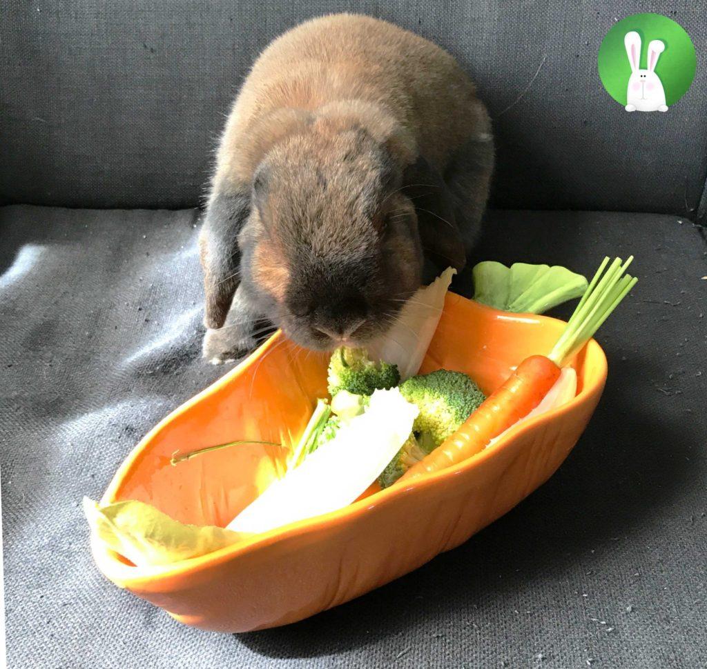 Groenten | Konijnenadviesbureau Hopster