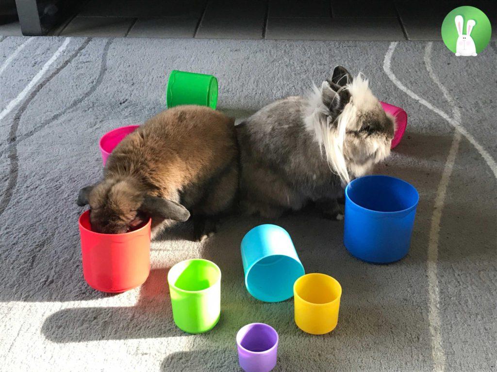 Hersenwerk voor konijnen | Konijnenadviesbureau Hopster