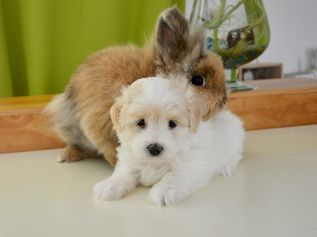 Hond en konijn | Hopster vzw