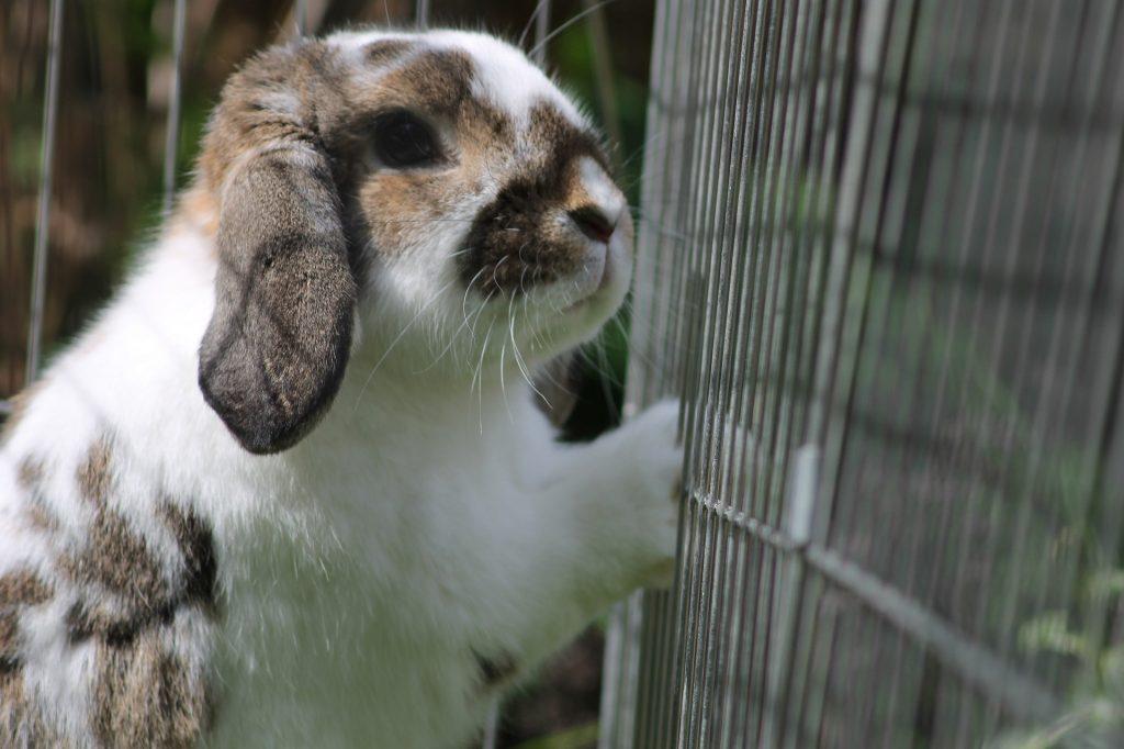 Eenzaam konijn | Hopster vzw