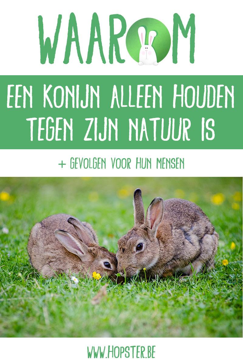 Waarom een konijn alleen houden tegen zijn natuur is | Hopster vzw