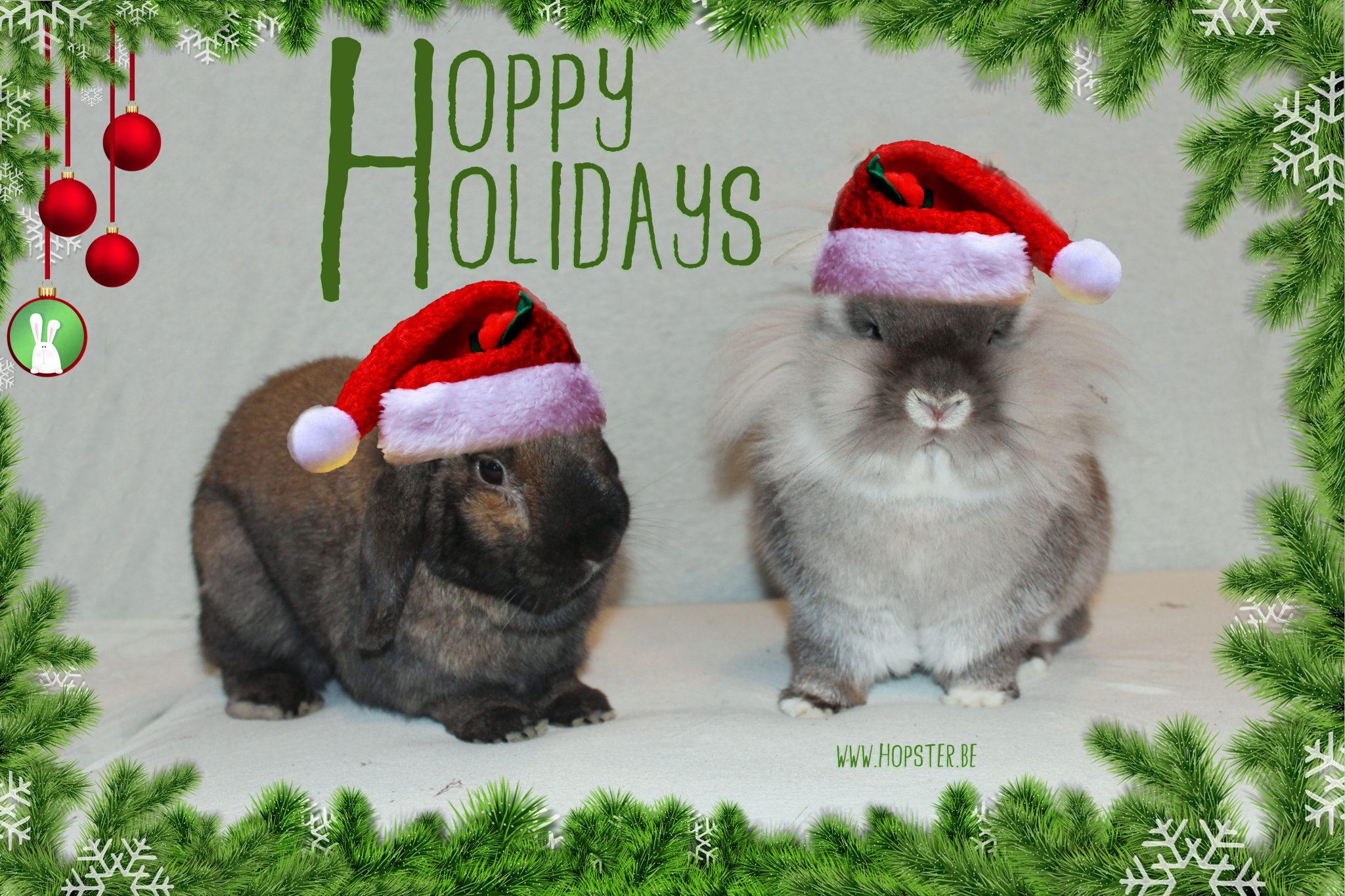 Hoppy Holidays | Konijnenadviesbureau Hopster
