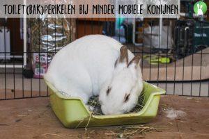 Toilet(bak)perikelen bij minder mobiele konijnen | Konijnenadviesbureau Hopster