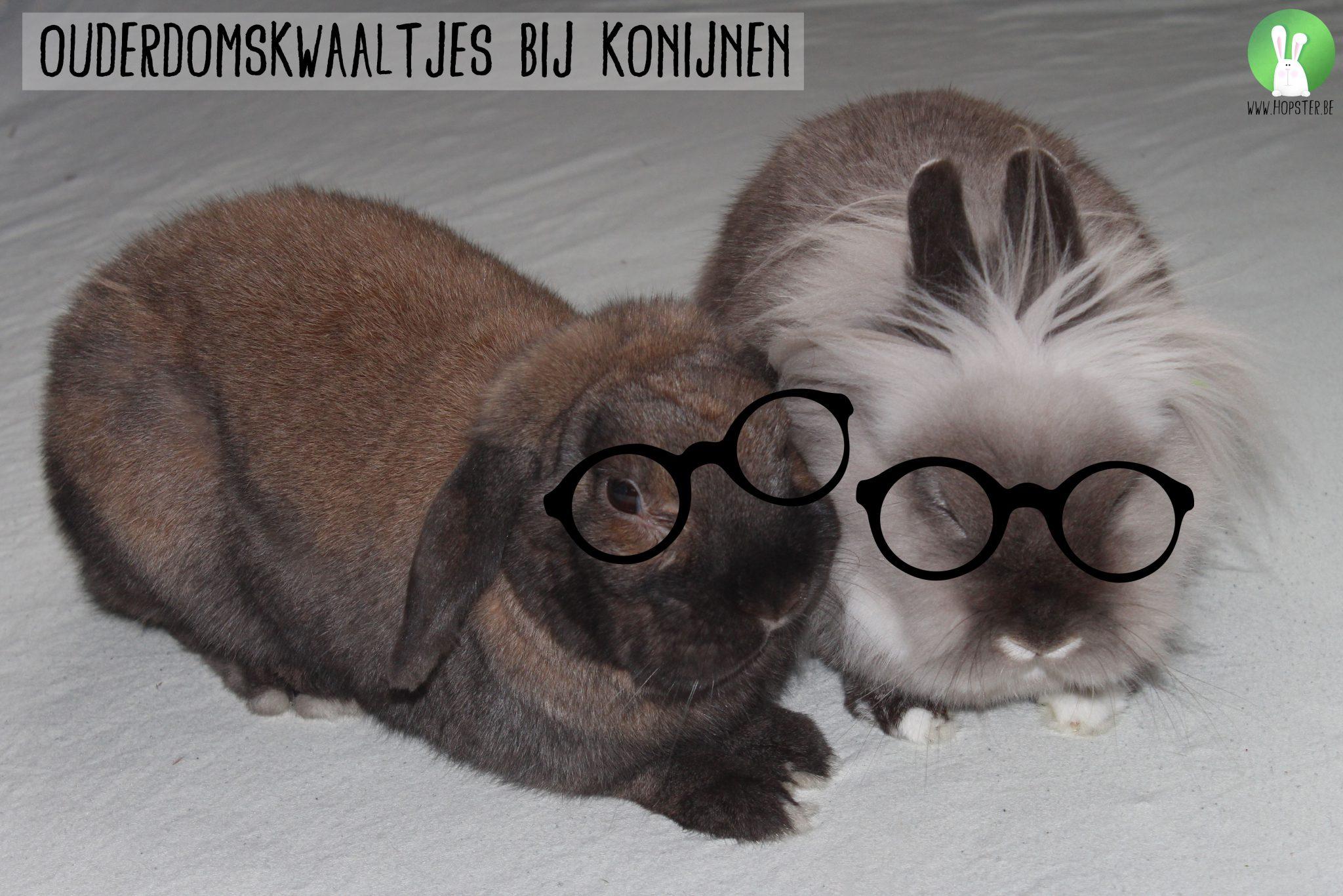 Ouderdomskwaaltjes bij konijnen | Konijnenadviesbureau Hopster