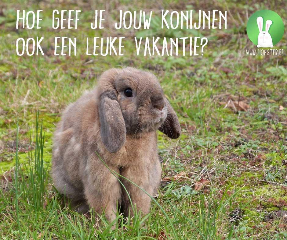 Hoe geef je jouw konijnen ook een leuke vakantie? | Konijnenadviesbureau Hopster