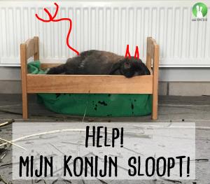 Help! Mijn konijn sloopt! | Konijnenadviesbureau Hopster