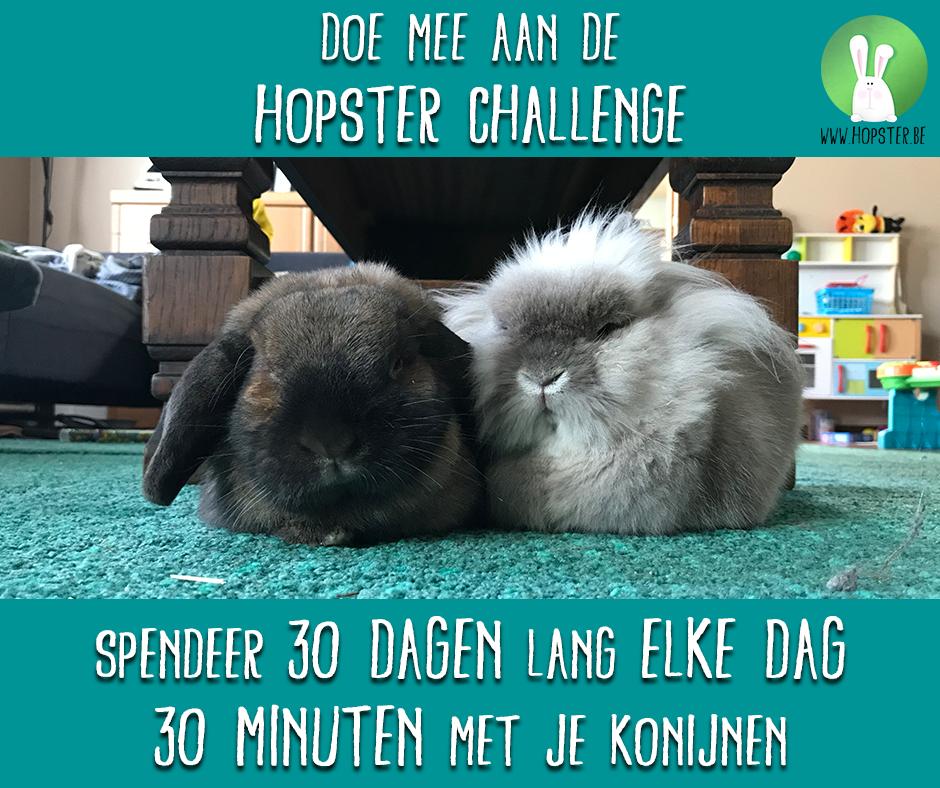 Hopster Challenge: Spendeer 30 dagen lang 30 minuten met jouw konijnen