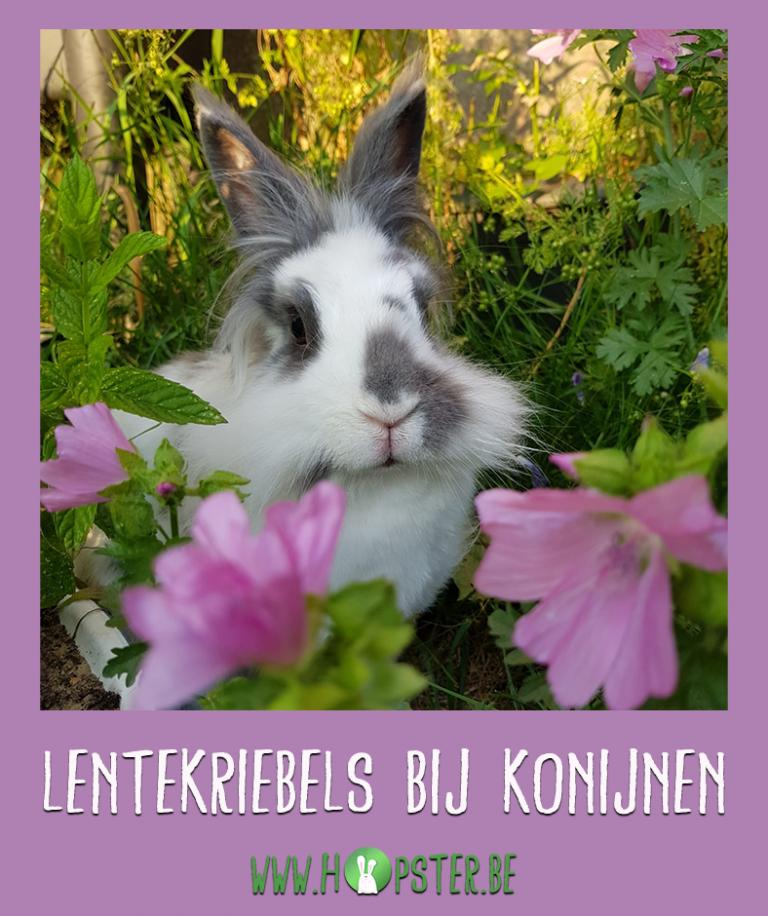 Lentekriebels bij konijnen | Konijnenadviesbureau Hopster