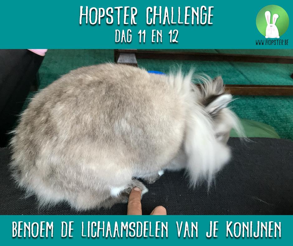 Hopster Challenge