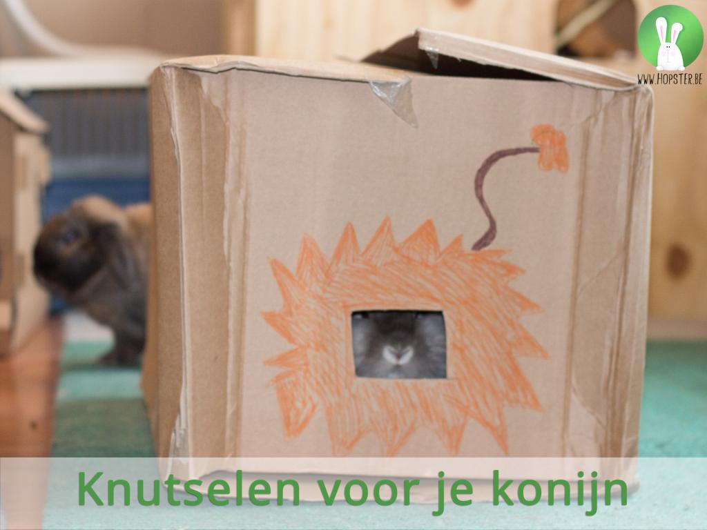 Knutselen voor je konijn | Konijnenadviesbureau Hopster